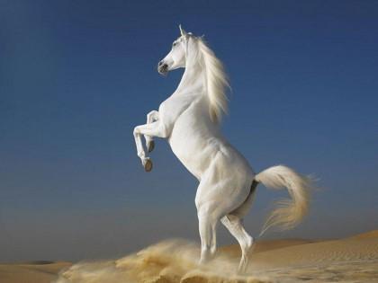 Earxagangnad Running Horse Wallpaper