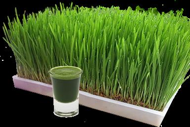 http://brainbasedtherapy.blogspot.com/2014/06/wheat-gluten-wheatgrass-juice.html