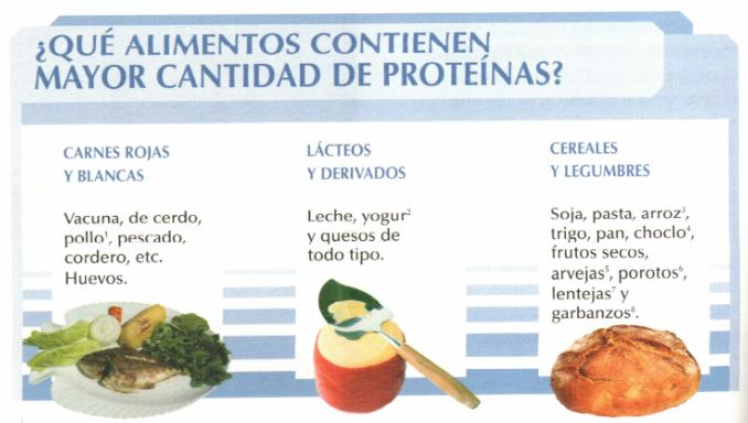 Cemuvenezuela proteinas macromoleculas indispensables en el crecimiento - Alimentos vegetales ricos en proteinas ...