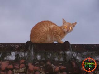 Mata Kucing ku Yang Bersinar Tajam