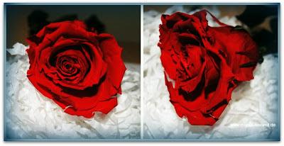 Kunstblumen kaufen