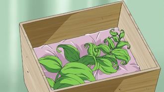 Armamentos 330px-Revival_Herb_anime