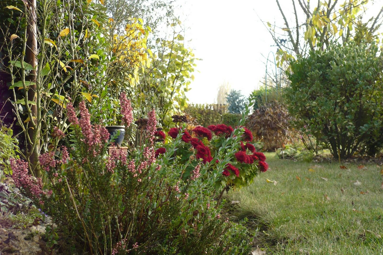 Le jardin de pacalou novembre au jardin - Jardin novembre ...