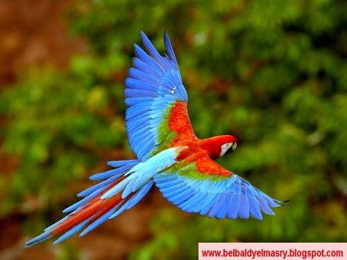 حمل وشاهد مجموعه جديده من خلفيات وصور اجمل انواع الطيور بتاريخ 9.11.2014 وحجم 10.5 ميجا بايت رابط مباشر