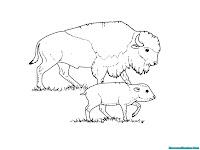 Gambar Induk Bison Bersama Anak Bison Untuk Diwarnai