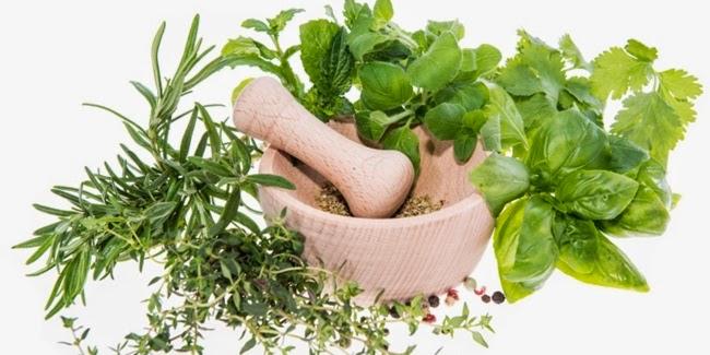 Kesehatan : Tanaman Herbal Untuk Kesehatan
