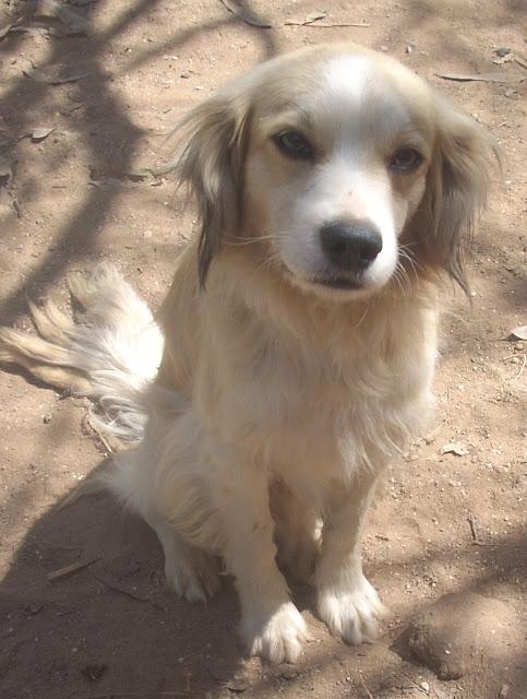 Sou o Renê, 1 aninho, porte médio, me dou bem com outros cães. Me leva pra casa?