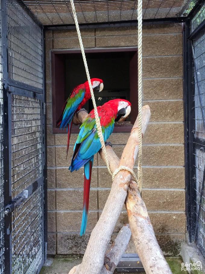 perroquet du zoo de Umi no naka-michi, Fukuoka