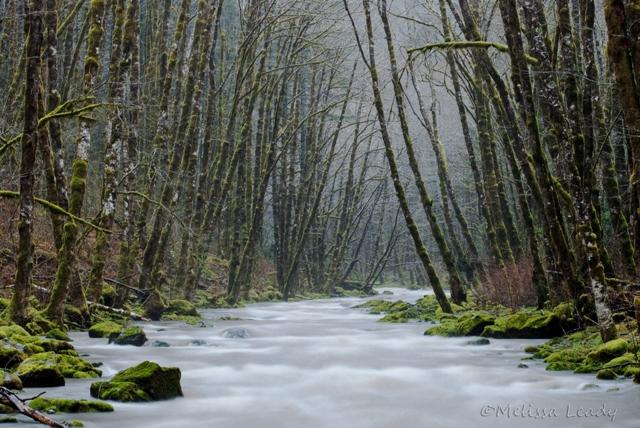 Wilson River in the Rain