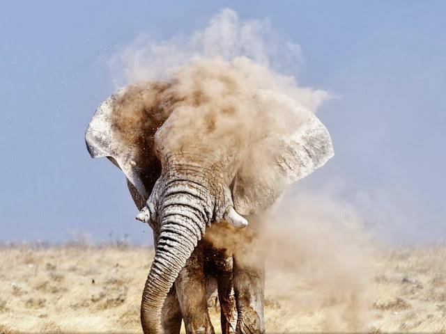"""<img src=""""http://1.bp.blogspot.com/-b7I1ZF8823k/Uq8U9XVA_RI/AAAAAAAAFtk/UNAYuQFUUaQ/s1600/ut.jpeg"""" alt=""""elephant animal wallpapers"""" />"""