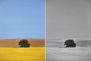 Photographing Black and White Landscapes