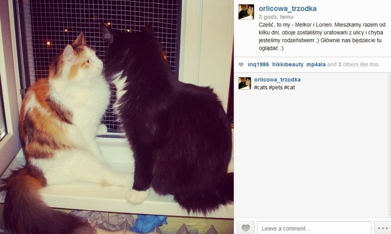 http://instagram.com/orlicowa_trzodka