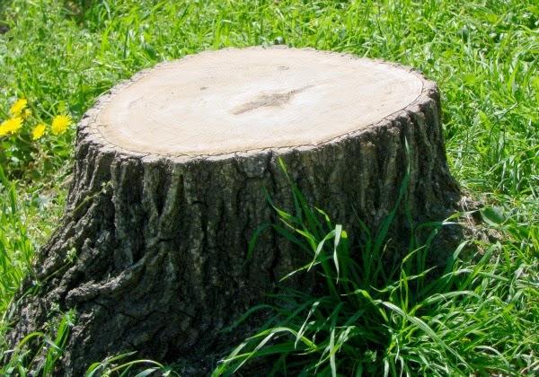 5 ideas para decorar el toc n de un rbol talado guia de for Arboles para cierre de jardin
