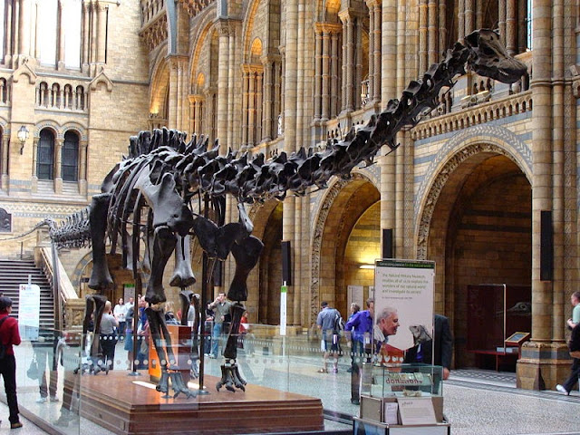 Natural History Museum, Central Hall, Diplodocus Dinosaur - London attractions