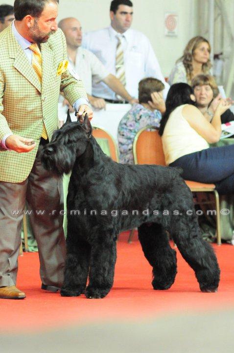 (CG) CIRO DE BARBA NEGRA padre de los cachorros de la 2da camada de Arax (2011)