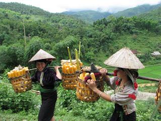 Parc national Hoang Lien, province de Lao Cai