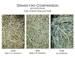 cavy grass hay comparison
