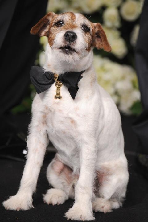 CHOPARD diseña dos collares únicos de perro para UGGIE con un fin benéfico
