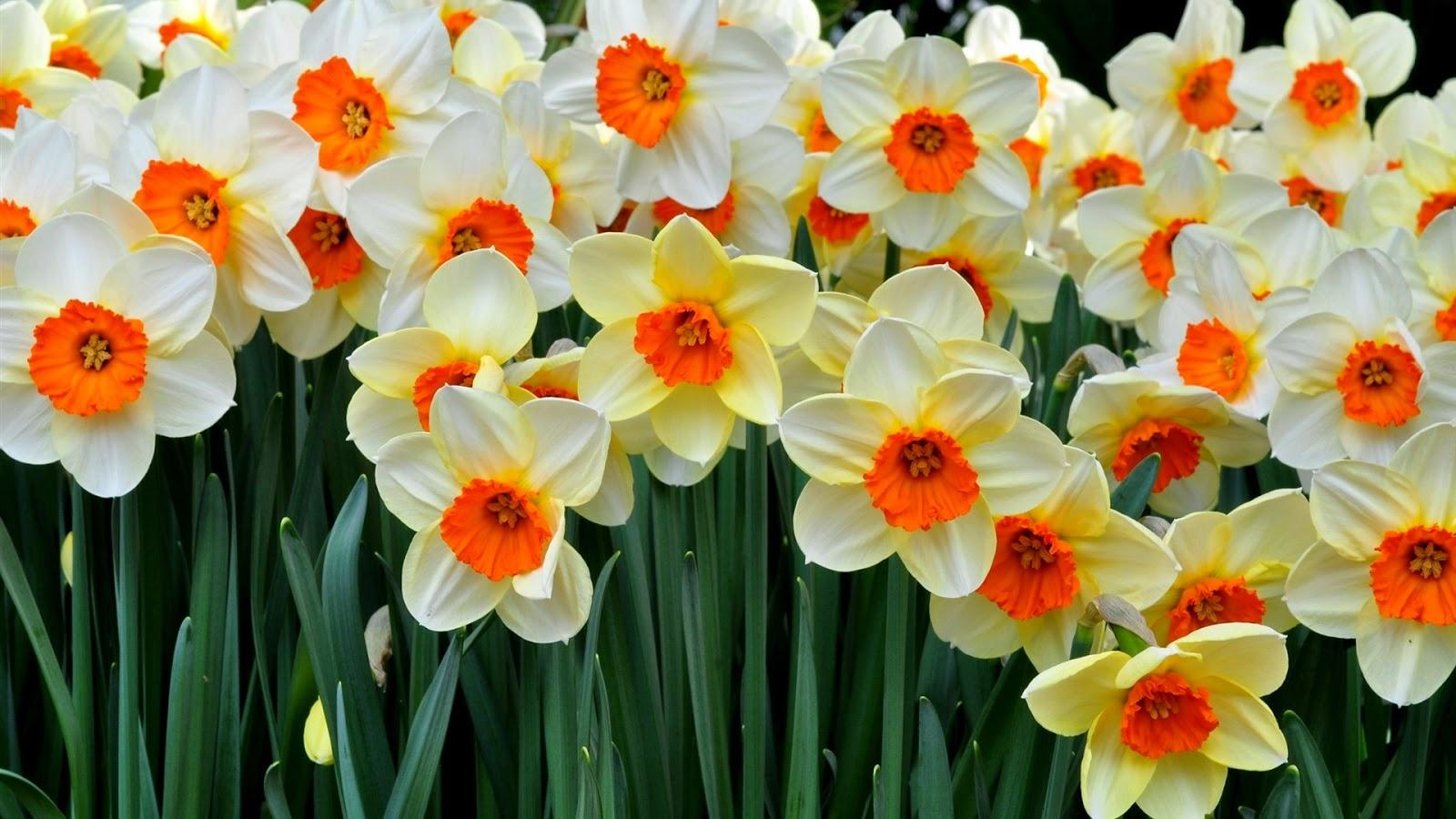 Картинки красивые цветы на аву