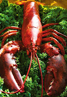 Traditional boiled Lobster and how to determining fully cooked Lobsters