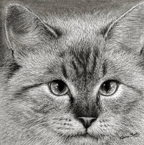 17-Charles-Black-Hyper-Realistic-Pencil-Drawings-of-Dogs-www-designstack-co