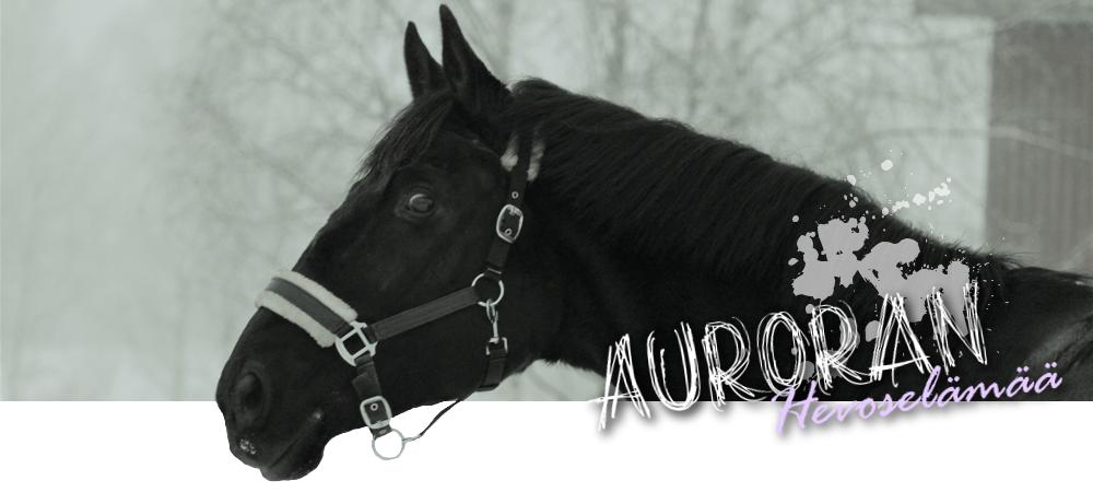 Auroran hevoselämää
