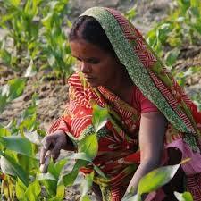 बनें यमुना सेवक : एक व्यक्ति एक वृक्ष कार्यक्रम से जुड़ें