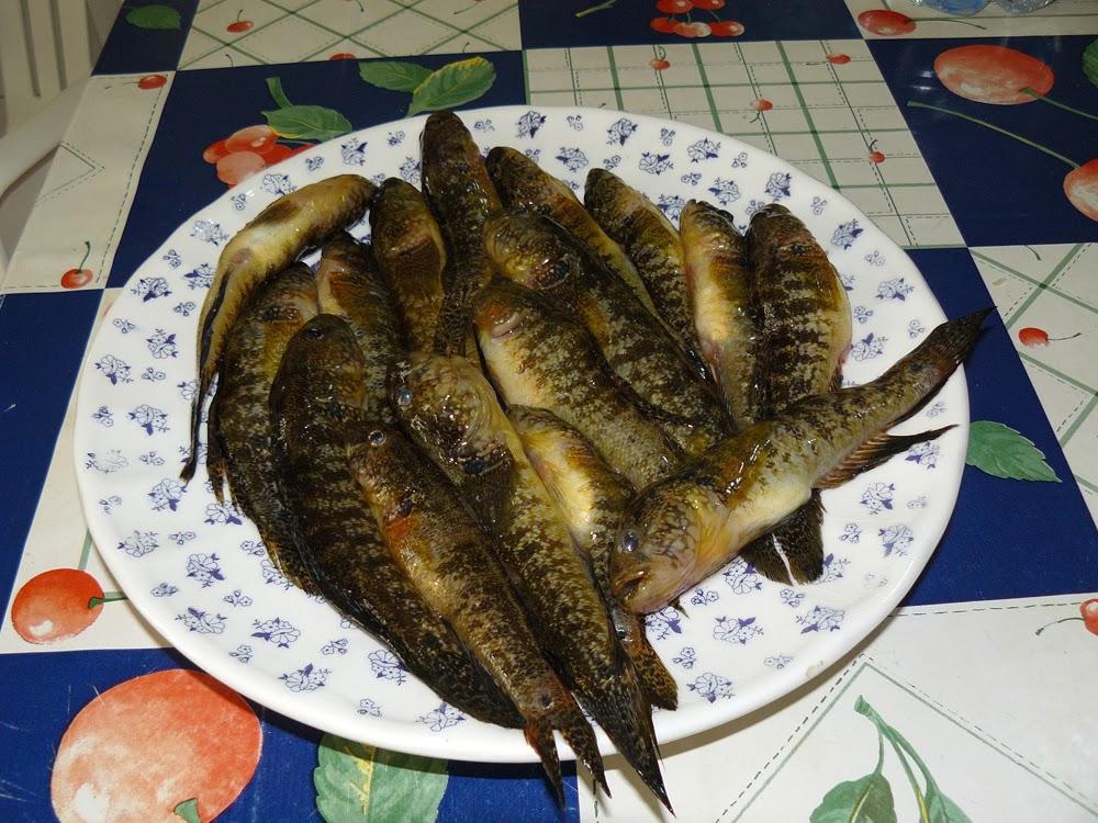Sud italia in cucina risotto con i gobbioni risotto con - Pagina di colorazione del pesce ...