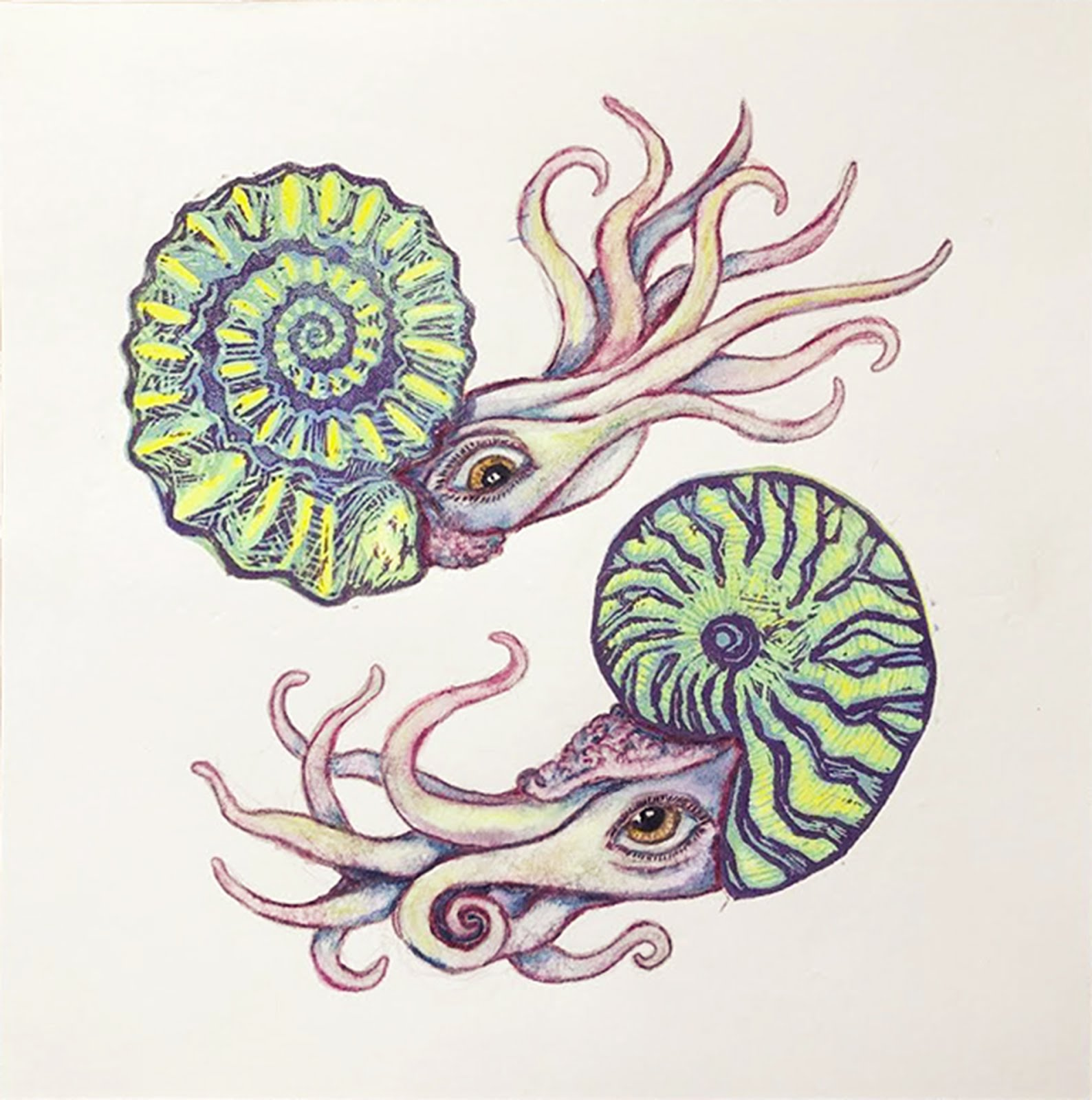 The Nautilus and the Ammonite book will be released this June!