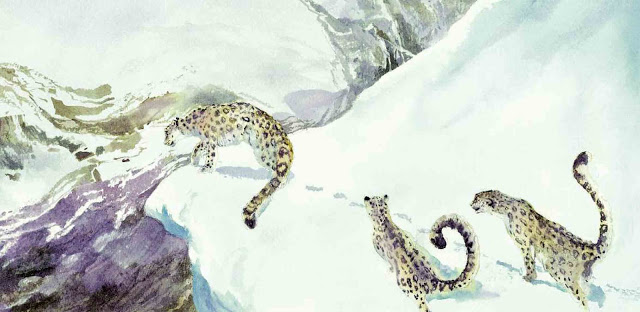 how to draw a snow leopard animal jam