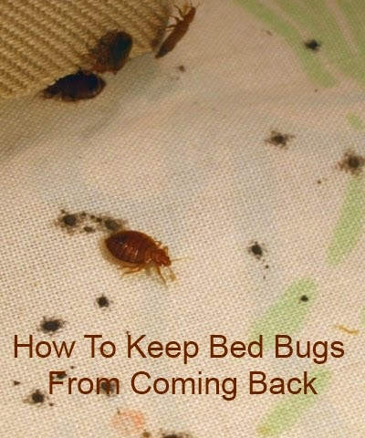 Bed Bugs Coming Back