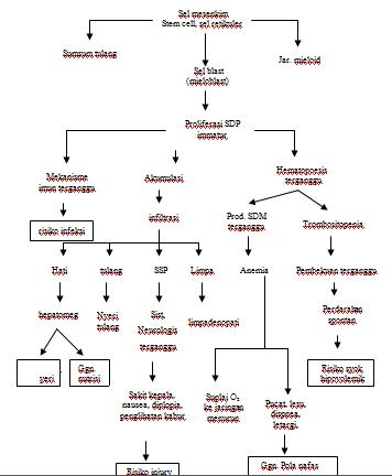 Patofisiologi dan Pathways leukemia ALL (Acute Lymphoid Leukemia)