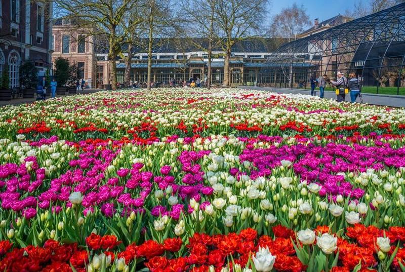Festival de Tulipan, Amsterdam