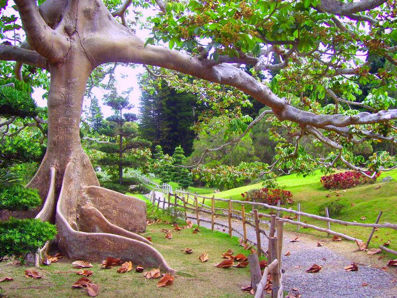 Luna de miel vacaciones - Plantas jardin japones ...