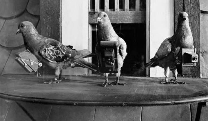 palomas con camara fotografica, foto