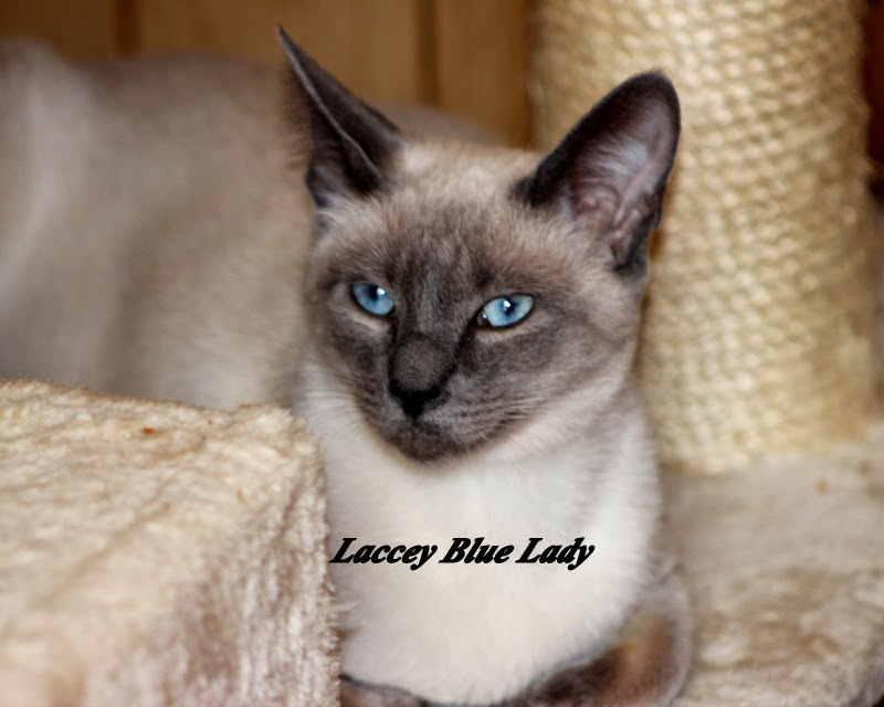 Lacey Blue Lady
