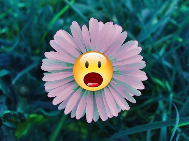 A Flor Que Nao Morreu [1959]