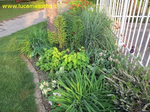 Foglie di brianza disegnare il giardino - Disegnare un giardino ...