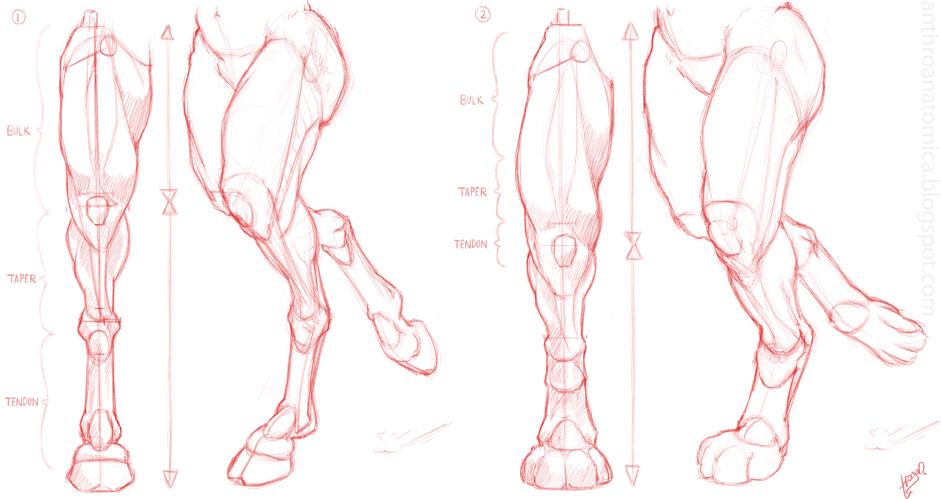Anthro Anatomica: Anthro leg structure 3