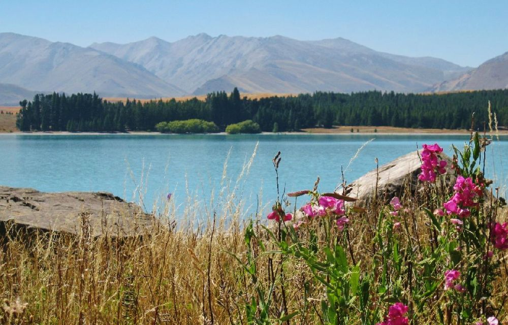 Cruise Of The Ladybug Pictures From Lake Pukaki And Mount Cook Hikes