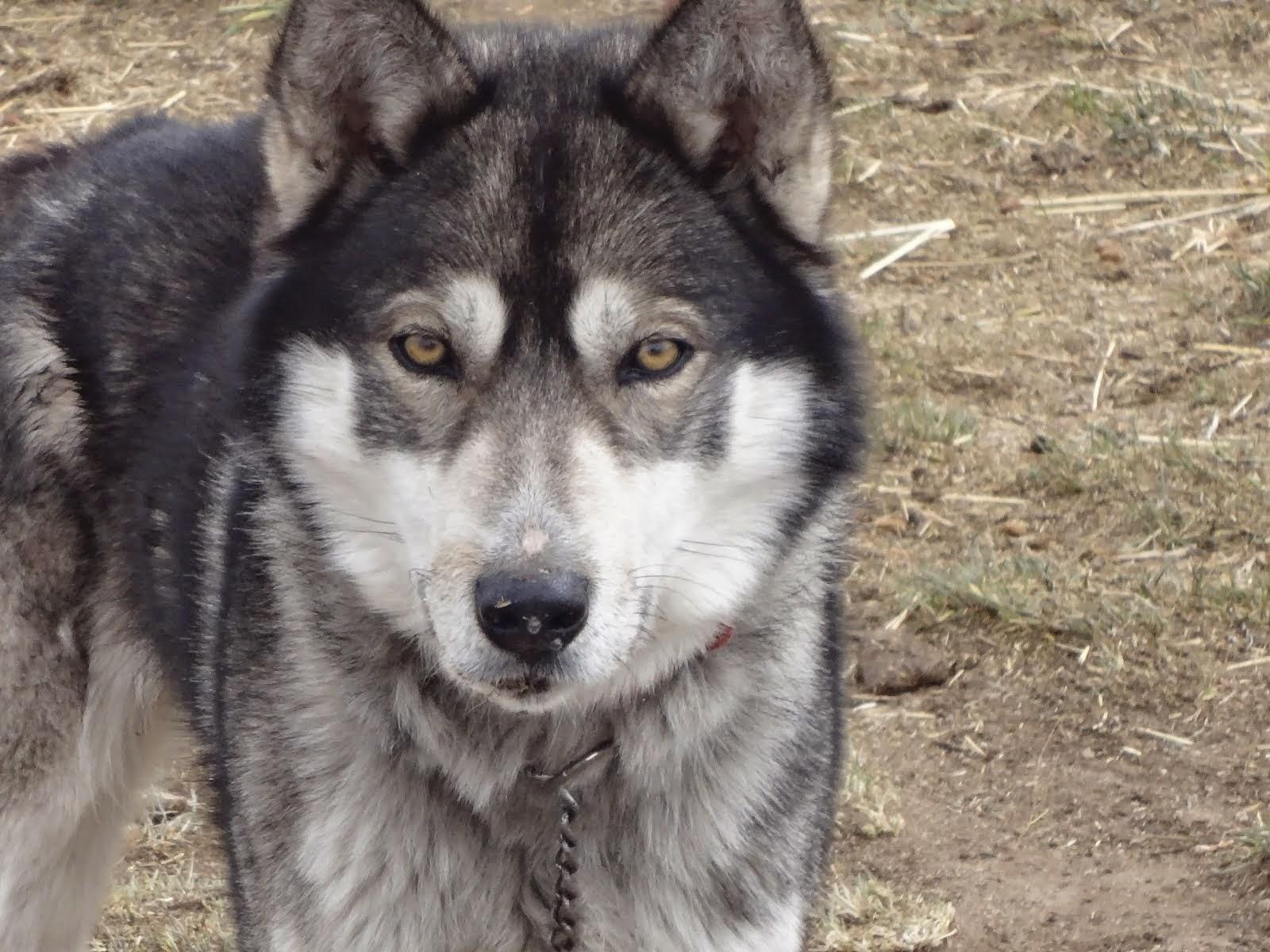 Wolf Eyes!