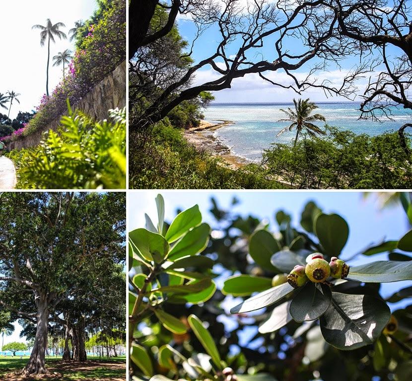 flora on oahu photo