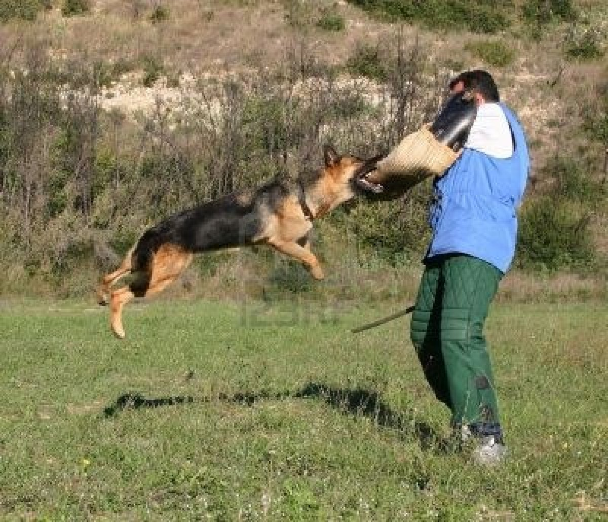 german shepherd training book monk