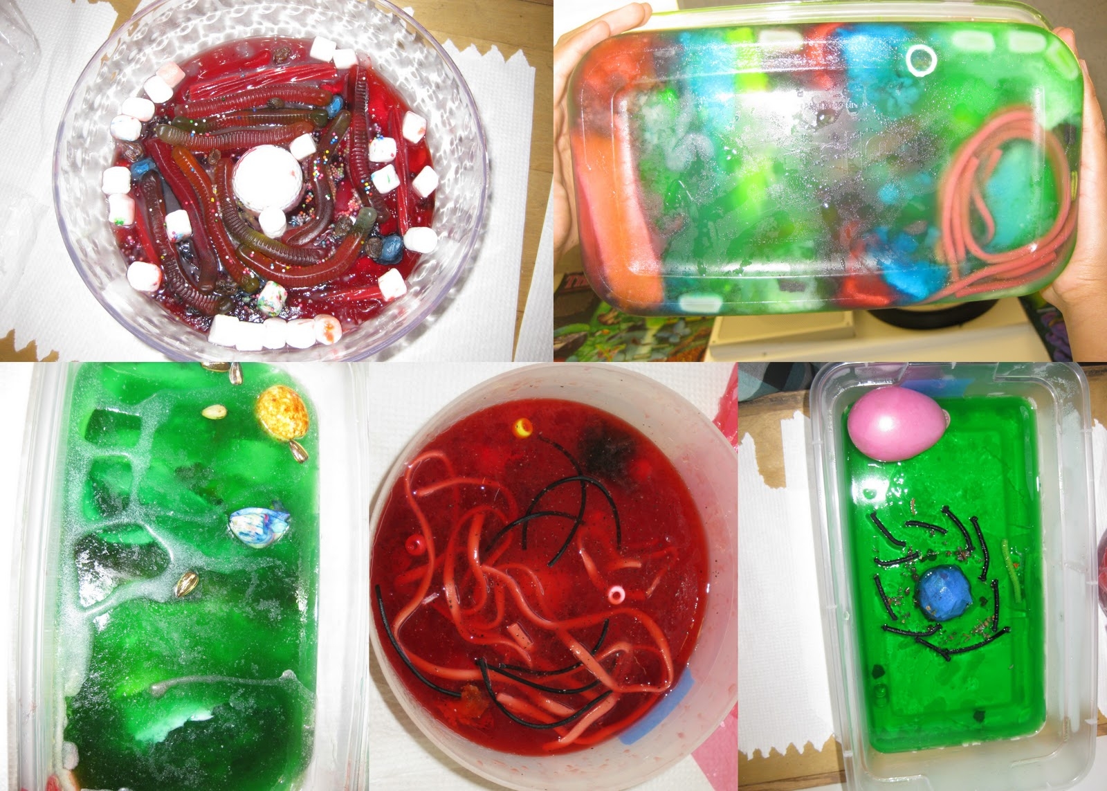 Jello Edible Plant Cell Projects http://mrskoehnke.blogspot.com/2011/04/6th-grade-jello-cell-project_605.html