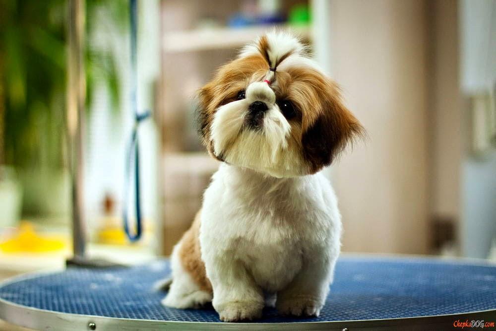 imagenes de perros graciosos