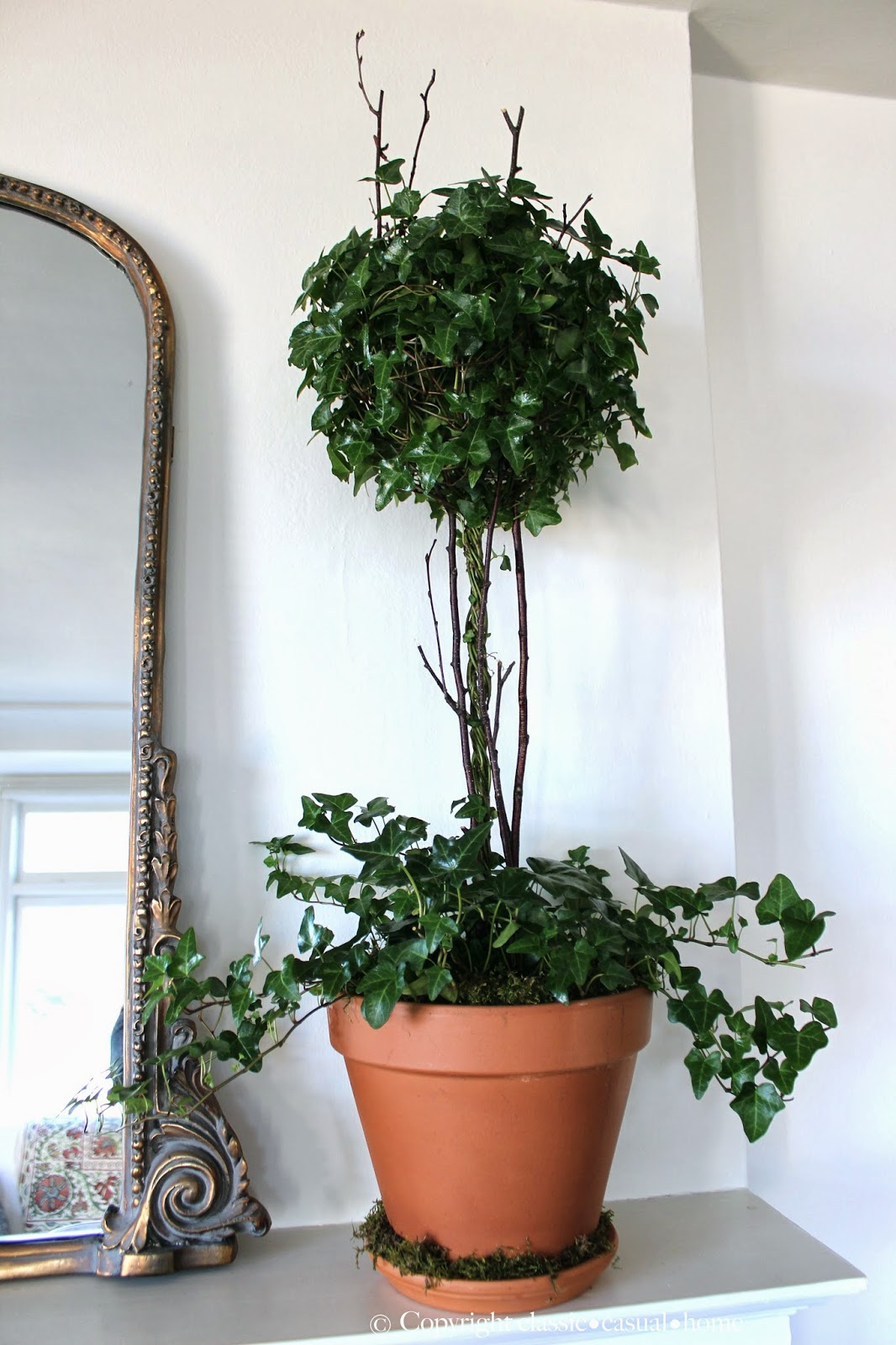 Classic Casual Home Fresh Plants To Replace Your