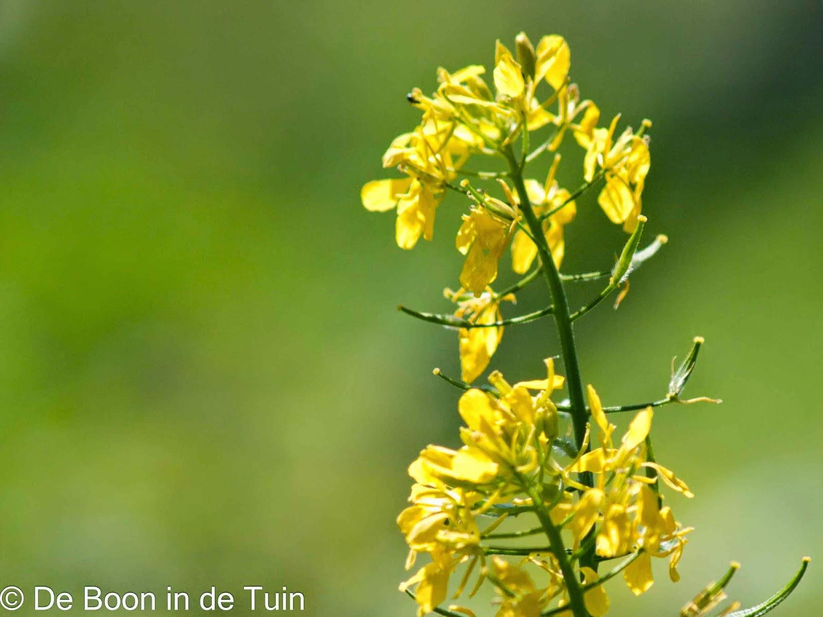 bloem moestuin volkstuin