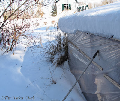 Protect chickens from wind by covering the run.