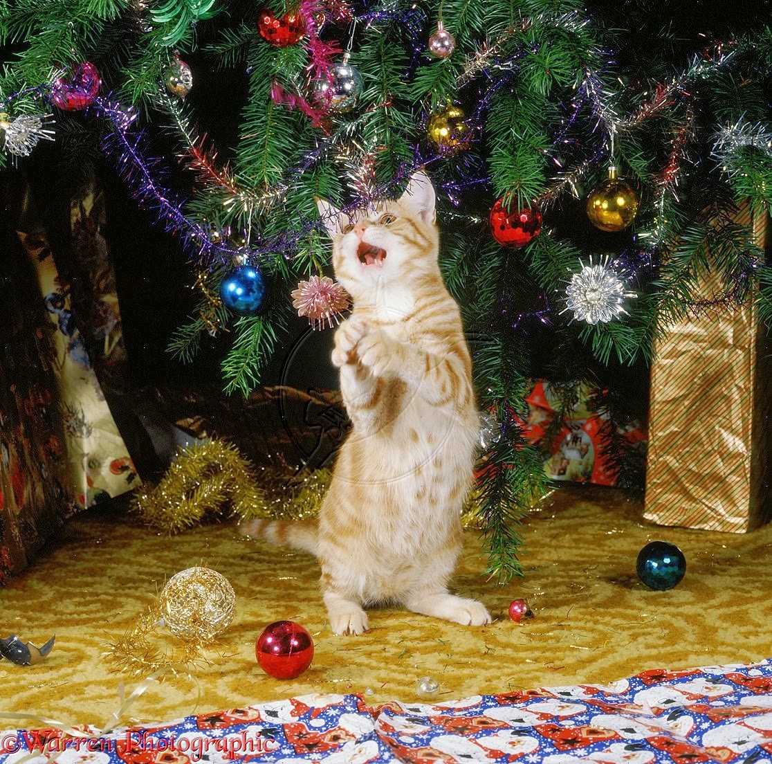funny playing cat in front of christmas tree decoration sets