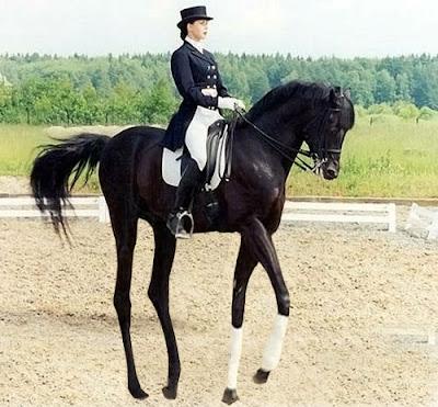 http://1.bp.blogspot.com/-bD_l4NImYlI/T8H9_0mqPtI/AAAAAAAAAY4/GbORrjMPI-Y/s400/high-horse.jpg
